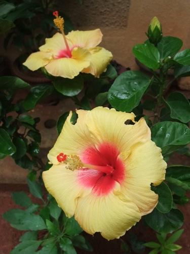 30flower