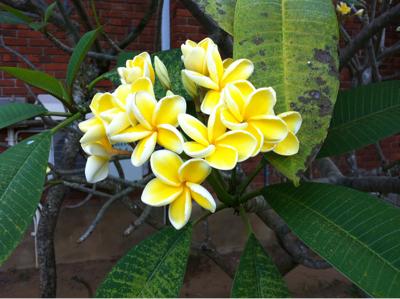 スリランカで初めての朝。