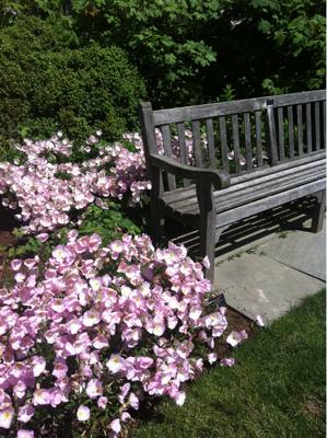 花草木、萌ゆる庭。