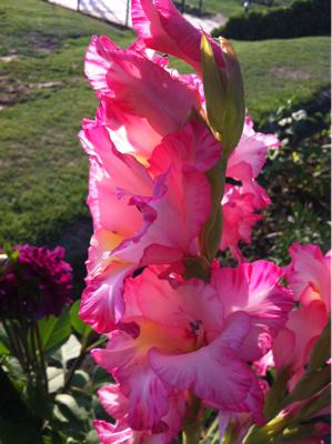 昨日の花々。