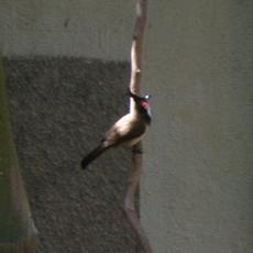 26bird01