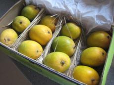 07fruits02_7