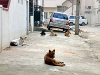 10dogs01