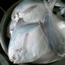 24fish05