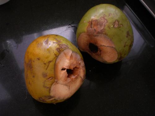 12coconut