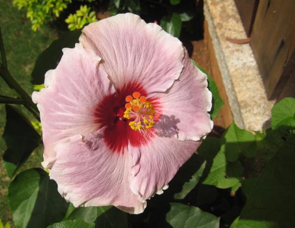20flower