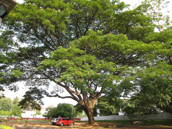 20raintree